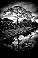 Tree on the Canal