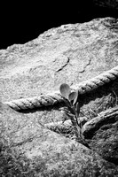 Rocks, Rope and Plant-3747